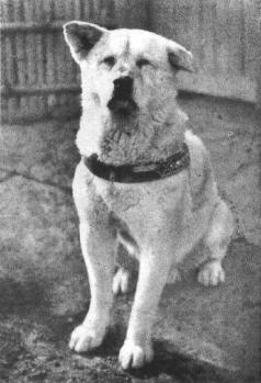 hachiko_1935